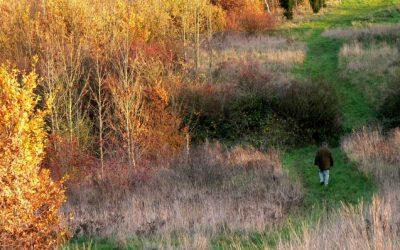 Peaceful Walks in South Kesteven
